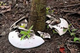 cremation tree spíritree biodegradable burial urn turns cremation ashes into a