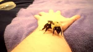 holding a huge bumblebee youtube