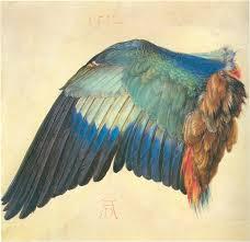 Bird Wing - wing of a european roller