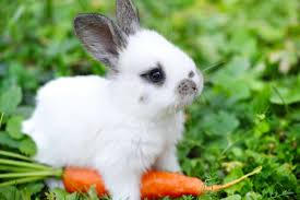 rabbit rabbit a baby rabbit is actually called a kitten and other names you