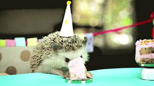 Birthday Animal Meme - animal birthdays are obviously the best birthdays happy birthday