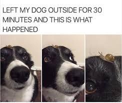Border Collie Meme - funny random meme dump album on imgur