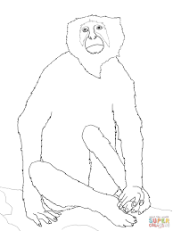 langur monkey coloring page free printable coloring pages