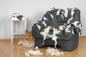 mon fait pipi sur le canapé mon chien urine dans la maison causes et solutions