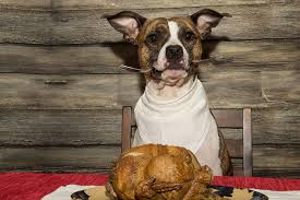 thanksgiving foods that are toxic to pets