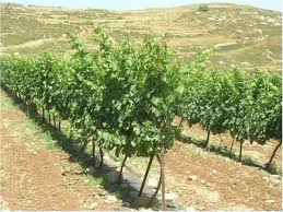 happy birthday israel let s plant more fruit trees united