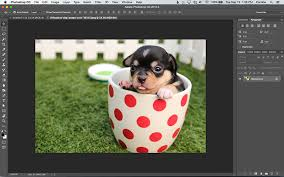 how to turn a photo into a vector line art with illustrator web