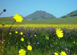 flowers dallas flower field by dallas 13 on deviantart
