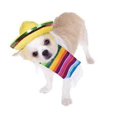 pet photo albums mexican dog breeds celebrate cinco de mayo houston pettalk