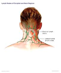 are lymph nodes in back of neck photos locations of lymph nodes