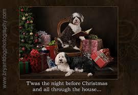 christmas cards christmas gifts for dog lovers pet christmas