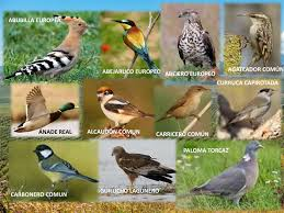 biodiversity up to 50 different species of birds in our olive