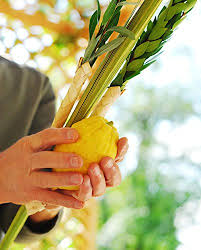 etrog for sale kosher certified lulav and esrog etrog set for sukkos