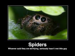 Cute Spider Meme - re the party thread page 1 088 beauty insider community