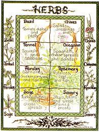 herb chart rosemary s sler basic herbs chart