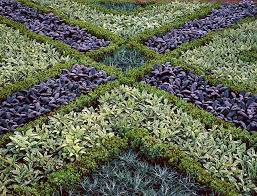 ornamental herb garden photograph by science photo library