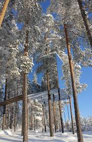tree hotel sweden one of the tree rooms at the tree hotel in harads sweden this one