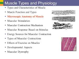 Anatomy And Physiology Exercise 10 Muscle Types And Physiology Types And Characteristics Of Muscle