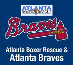 boxer dog rescue florida atlanta boxer rescue atlboxerrescue twitter