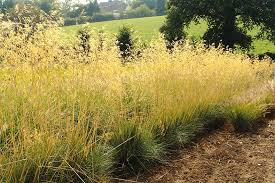 top ornamental grasses for designers garden design journal