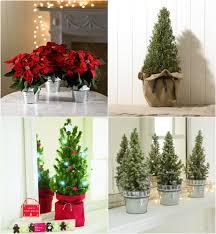 Christmas Plants Beautiful Christmas Flowers U0026 Plants From Marks U0026 Spencer Flowerona