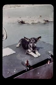 18 best macg sog images on pinterest vietnam veterans vietnam