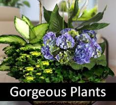 Flowers To Go Weddings Wedding Flowers Event Flowers Tacoma Florist