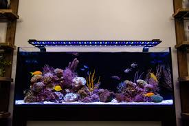 current usa orbit marine aquarium led light current usa 72 orbit marine ic pro led fixture w loop 144 watts