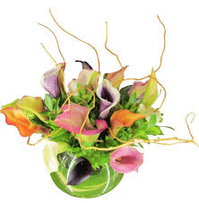 Calla Lily Flower Delivery - mini calla lily classic collage products local florist in san