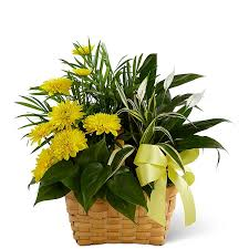 Get Flowers Delivered Today - same day plant delivery get plants delivered today