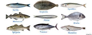 pesci alimentazione alimentazione pesci buoni e pesci cattivi di mare d