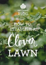 eartheasy bloghow to establish a clover lawn eartheasy blog