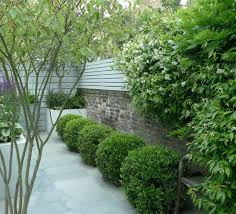 winterharte pflanzen balkon pflanzen fr balkon und garten inside pflanzen für garten
