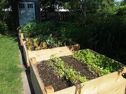 urban backyard popular backyard farming home decor ideas