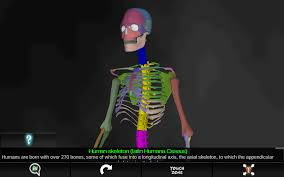 Interactive 3d Anatomy Interactive 3d Skull Model 3d Skeleton Anatomy Provides An