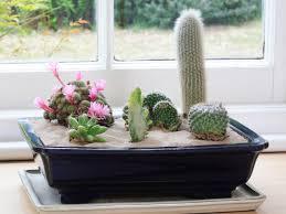 Cactus Garden Ideas Create An Indoor Desert Garden Hgtv