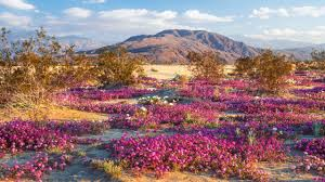 anza borrego backpacking california s anza borrego desert travel with rei