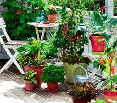how to start a balcony kitchen garden complete guide balcony
