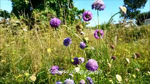 Pictures Of Garden Flowers by Garden Flowers For Bees August Youtube