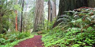 Forest And Waves State Of by Discover The North Coast Visit California