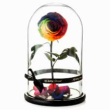 there u0027s a real life u0027beauty and the beast u0027 rose that lives for a year