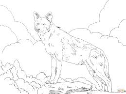 north american red wolf coloring page free printable coloring pages