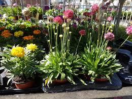 flower plants flower shop outdoor plants annivia gardens in paphos cyprus