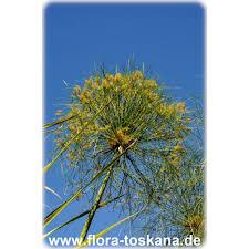 Tropische Pflanzen Im Garten Flora Toskana Die Pflanzenwelt Des Südens Flora Toskana
