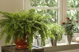 plantes d駱olluantes chambre sélection de 24 plantes dépolluantes pour votre intérieur