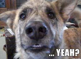 Dog Bacon Meme - bacon dog yeah meme on imgur