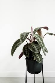 386 best indoor u0026 office plants images on pinterest office