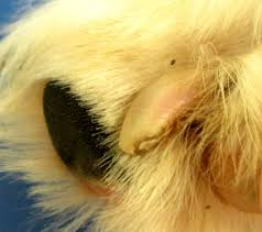 how to trim dog nails caring hands animal hospital