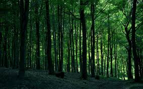 trees forest hd wallpaper 1921995