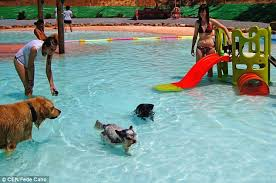 dog swimming pool opens in spain with waterslide and extra strong